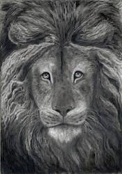 Old Lion's  Portrait