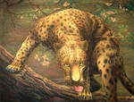 Leopard sees prey