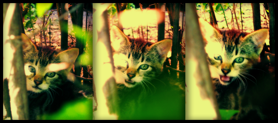Kitty, say 'meow' by Kotomarii