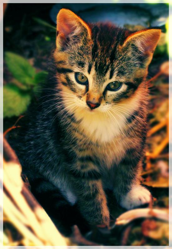 Cuteness by Kotomarii