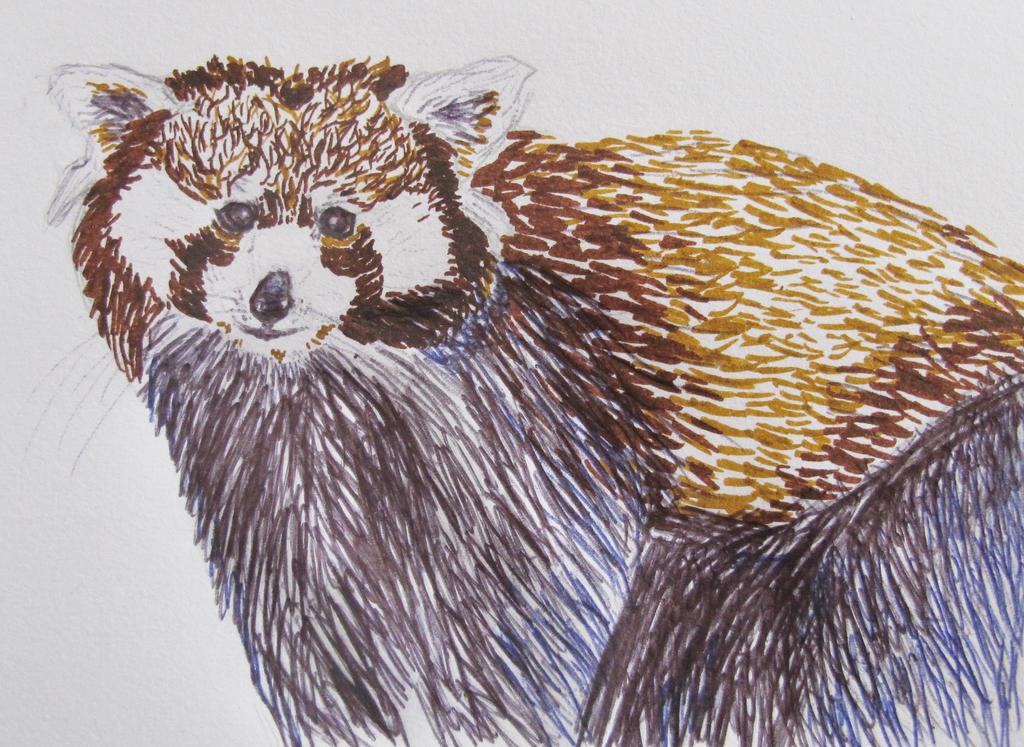 Red Panda Doodle by blazingstorm