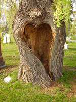 Love Tree NEW Serie Pic 8 by CosmiksquirelSTOCK