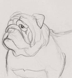 English Bulldog by oddno1ishere