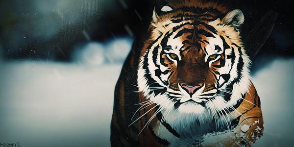 Tiger effect by HazemART