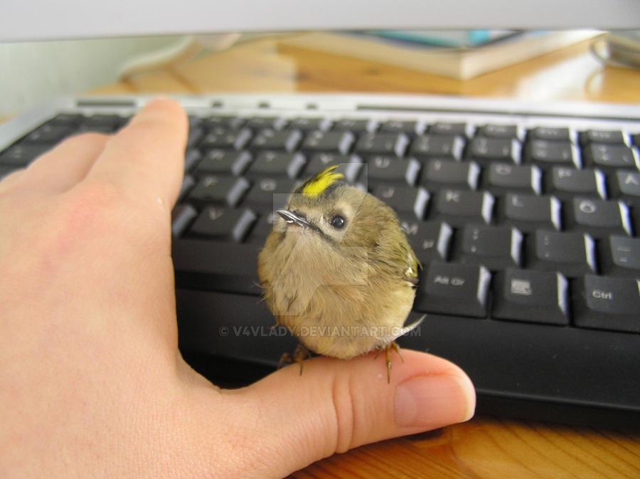 I found a baby bird by V4Vlady