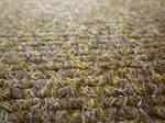 Carpet 001