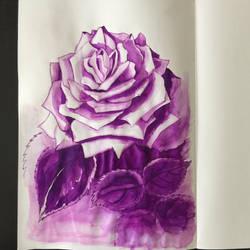 Graces rose