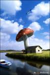 My BIG Mushroom