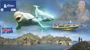 Beluga Whale Sanctuary