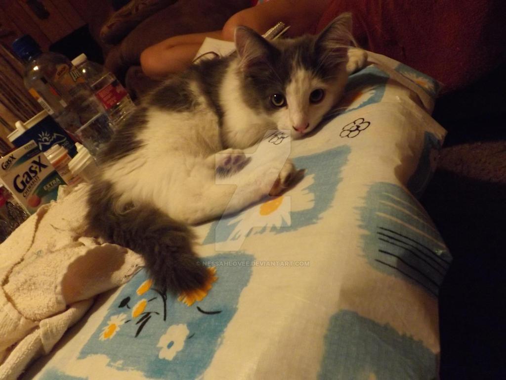 Lazy Kitten by nessahlovee