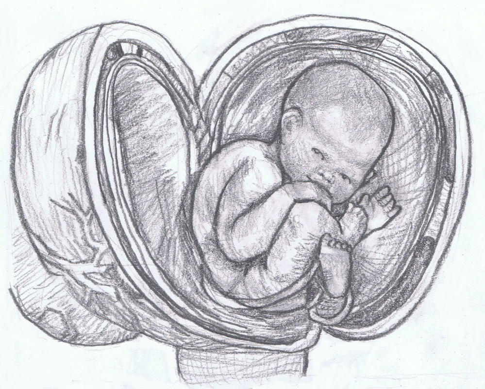 Bye-lo Baby in uterus by gagambo