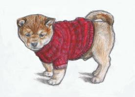 Dressed puppy