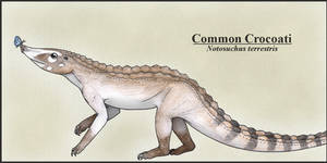 Common Crocoati