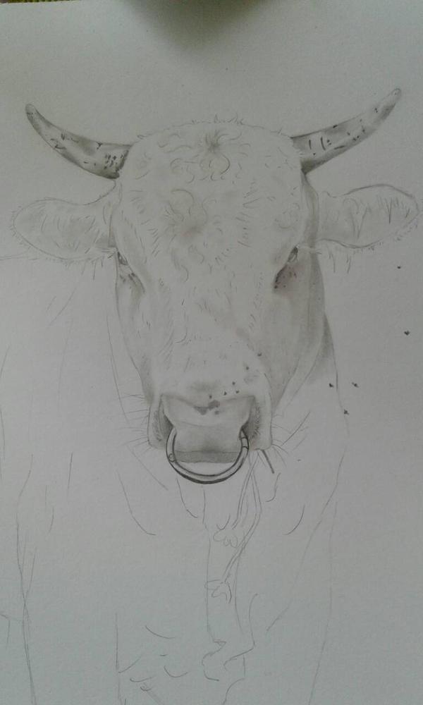 Weier Stier by Marionettenherz