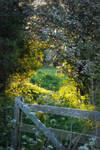 Summer Gate by Ellie-S
