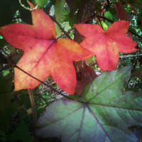 Autumn Leaves by Nicholas Emeigh by nemeigh