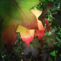 Progression of Changing Leaves by Nicholas Emeigh by nemeigh