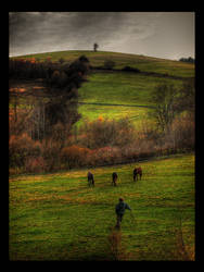Horses by chydu
