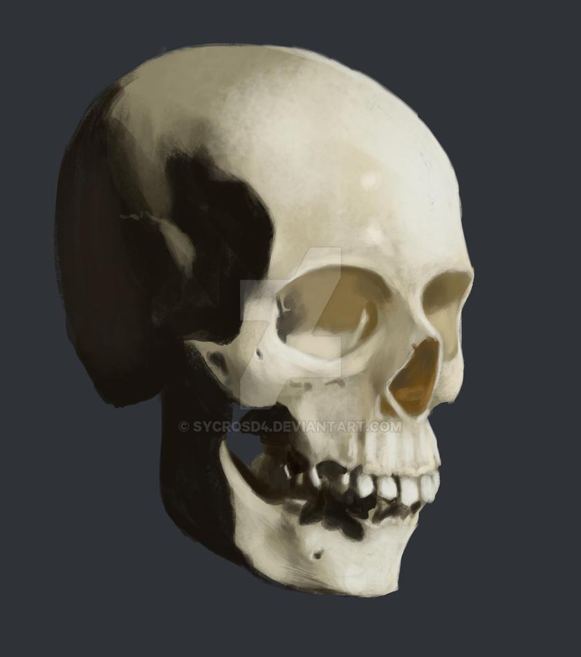 Skull study by SycrosD4