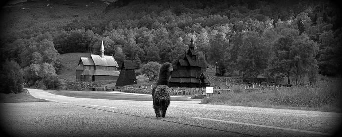 Die Katze von Borgund