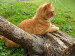 Cat Lying on Log Stock