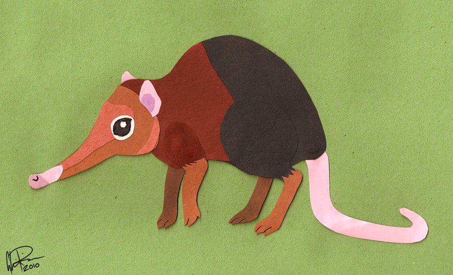 Paper Elephant Shrew by twapa