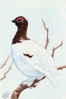 Winterbirds - Willow Ptarmigan by twapa