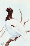 Winterbirds - Willow Ptarmigan