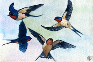 Barn Swallows Study by twapa
