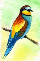 European Bee-eater by twapa