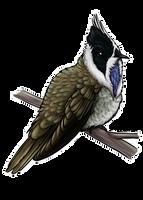 Blue-bearded Helmetcrest by twapa