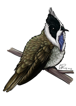 Blue-bearded Helmetcrest