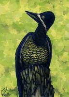 Powerful Woodpecker by twapa