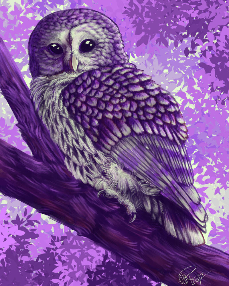 Mysterious Bird by twapa