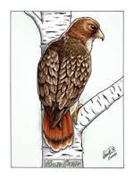 Hawk commission