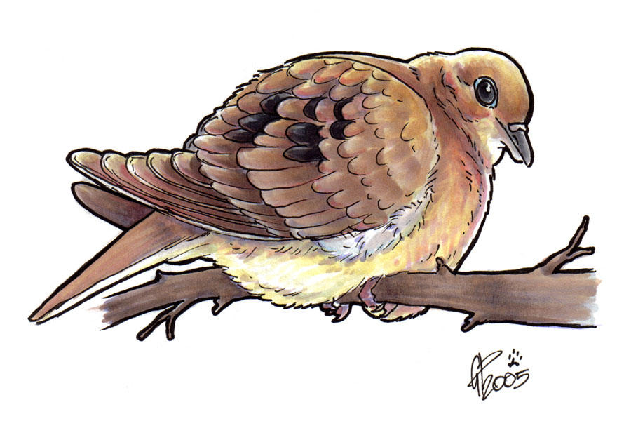 Mourning dove drawing mourning dove by twapa
