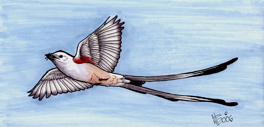 Scissor tailed flycatcher clipart - photo#9