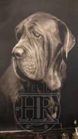 Dog final version