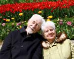 Tulip Time III