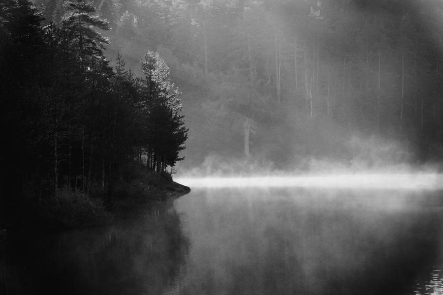 Misty by Canankk