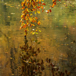 Monet Autumn by Canankk