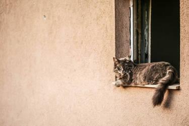 The Girl Next Door by Canankk