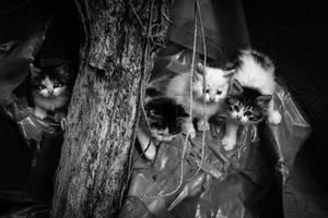 A Bunch Of Kittens