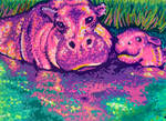 Majestic Hippos