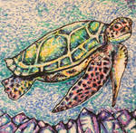 Majestic Hawkbill Turtle