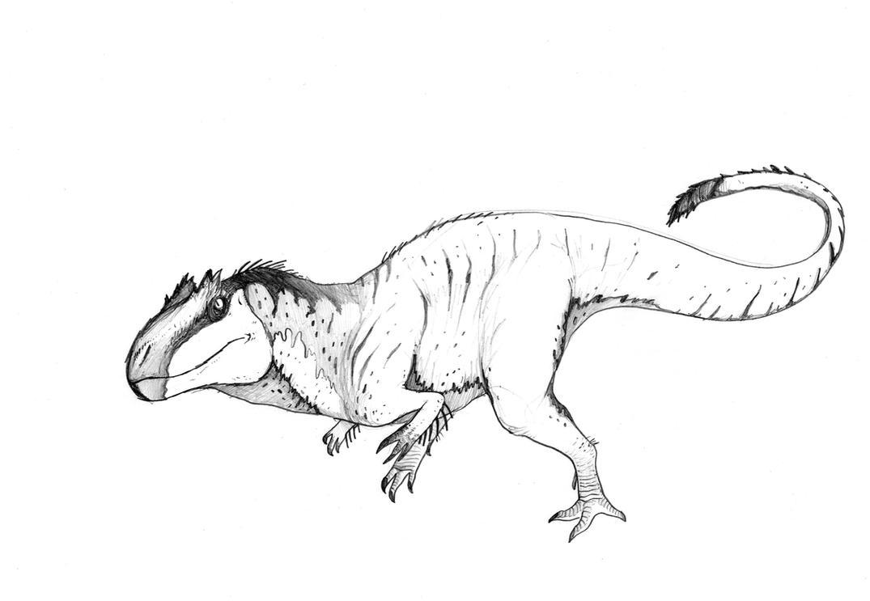 allosaurus by Aykwan