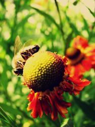 Garden Life 02