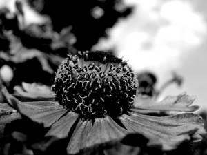 Garden Life 04