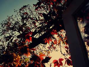 autumn wild vine