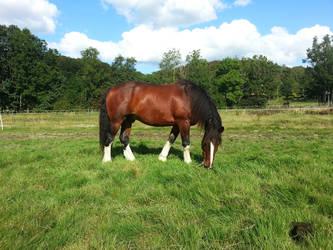 My horse! by Psylocke83
